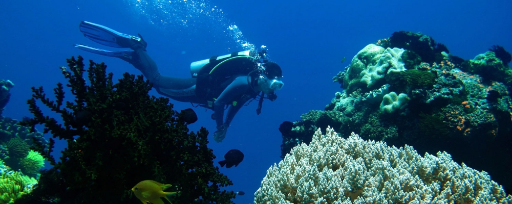 جزيرة سيبو