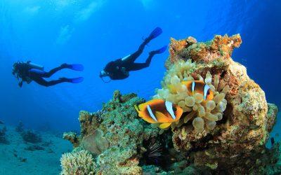 Al Bahader Reef -Jeddah