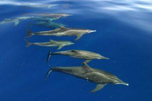 الدلافين تنادي بعضها بالاسم!2