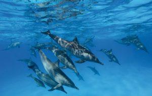 الدلافين تنادي بعضها بالاسم!3