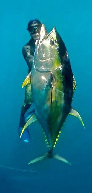 الصيد بالبنادق المطاطية