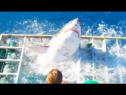 حادثة هجوم القرش الابيض على قفص الغواص