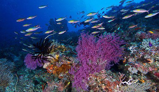 الحدائق المرجانية