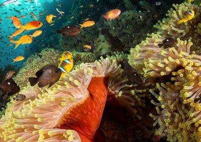 الغوص في جدة (5)