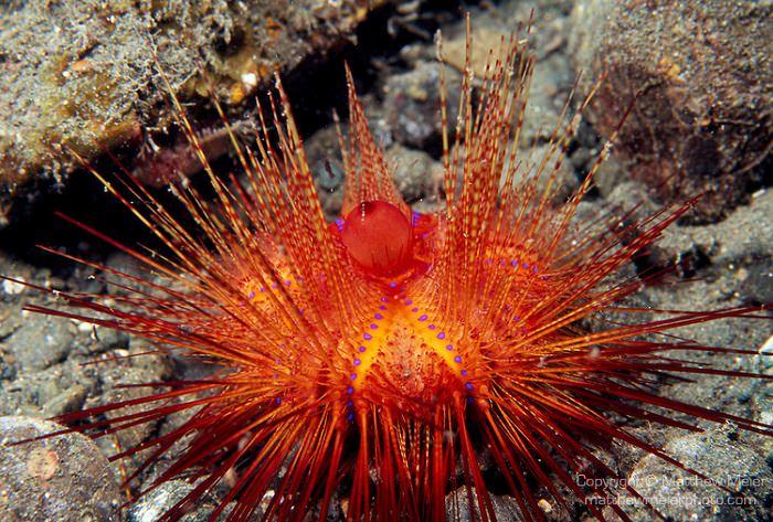 الكائنات الحية في سواحل جدة